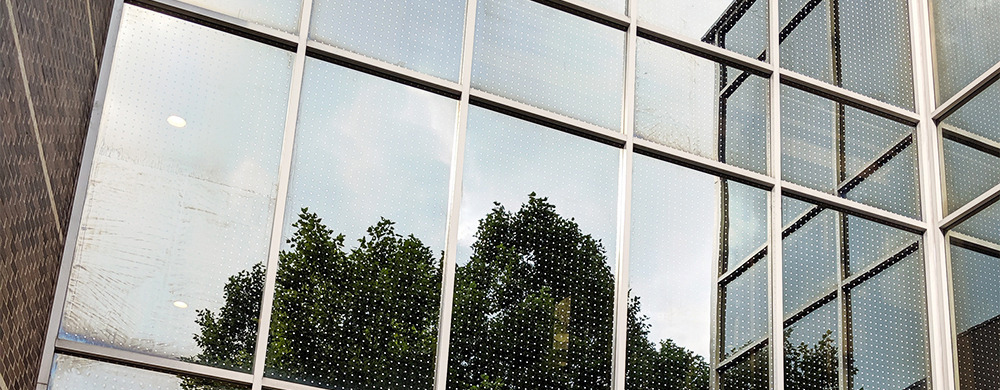 Bird Friendly Glass Photo