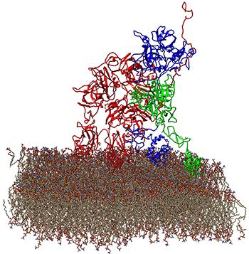 Prothrombinase