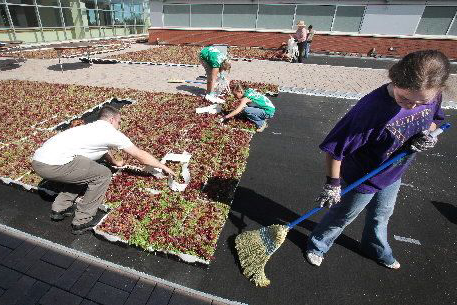 Green Roof Making